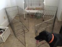 """Dog cage only """"1"""" left"""