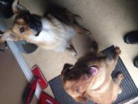 Two dogs in need of a home FREE