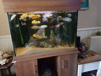 Large fish tank 3ft x2ft x 2ft