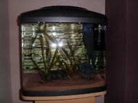 Fish Tank with stand excellent condition