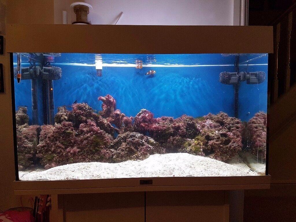 juwel rio 125 aquarium fish tank marine conversion in markfield leicestershire gumtree. Black Bedroom Furniture Sets. Home Design Ideas