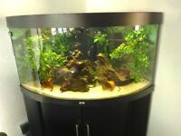 Juwel 350 Corner Fish Tank