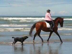 Helping Horse Owners Supplement Their Income