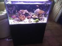 Clearseal Marine Aquarium