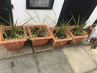 4 x terracotta style plastic plant pot grass palm