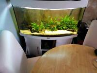 3 foot bowed fish tank