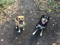 4pawswalks-Dog Walker and Pet sitting around St Albans and the surrounding areas.