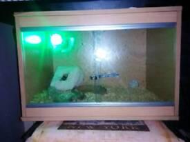 Rat snake and viv