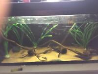 Aquarium tropical fish tank