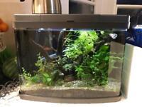 30 Liter Aquarium - Complete Setup
