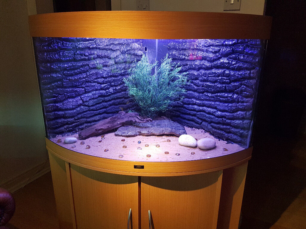 Juwel trigon 190 liter corner fish tank and stand for sale for Corner fish tank for sale