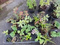 Young perennial plants (come every year) and some free pond weed (oxygenating)
