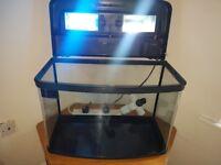 Fish box tank