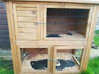 Rabbit House for sale