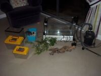 Fish Tank and equipment including main, nursery and holding tanks, light unit and three filter pumps