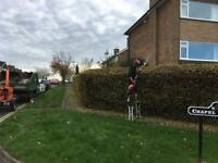 Tree and hedge care