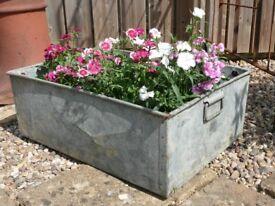 Galvanised Steel Trough/Planter