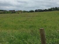 24 hour summer grazing