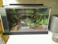 Fish Tank with 1 fish
