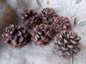 LARGE PINE CONES - ideal Christmas or Wedding decorations - 21 in total