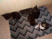 5 kittens 3 male 2 female
