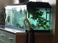 4ft fish tank with 5 red belly pirahnas