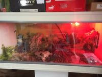 reptile vivarium with stand ,lots of extras(bulbs/heat mat/decor/calcium sand & bark/heat lamp etc