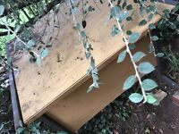 FREEBIE:- Garden / garage table. Been in garden. Sturdy metal / board. Use in garage, etc.