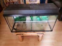 Large fish tank free
