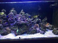 6ft marine fish tank full break down, live rock and corals, zoas, ricordea, acans. rock at £5 per kg