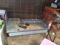 Two Guinea pigs and a cage