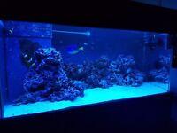 MARINE FISH AND FISH TANK 180L