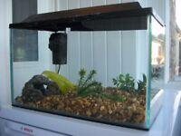 Aquarium / fish tank and filter