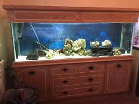 5ft fish tank and cabinet with led light unit