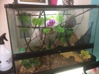 Full set up and crested gecko for sale