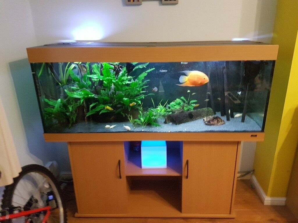 juwel rio 450 aquarium with extras in sheffield south yorkshire gumtree. Black Bedroom Furniture Sets. Home Design Ideas