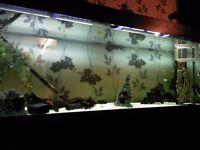 2metre fishtank
