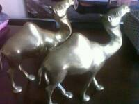 Two brass standing camels