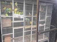 budgies and large outdoor cage for sale