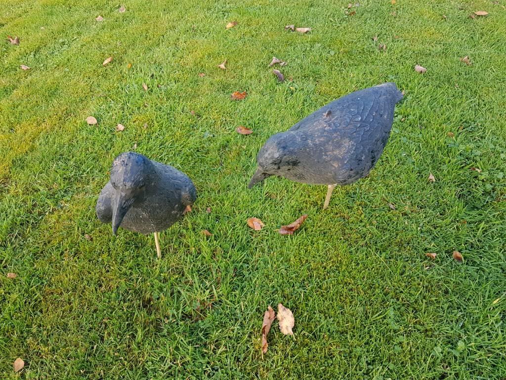 Decoy crows