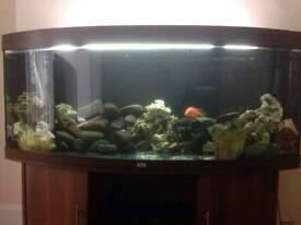 Juwel Bow Front 450L Fish tank Aquarium