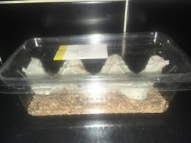 Box of Crickets (alive) FREE