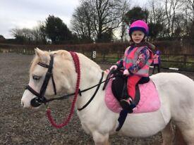 Amazing tommy lead rein pony