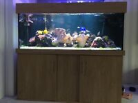 Marine fish tank with Oak effect stand and Sump tank is 5x2x2