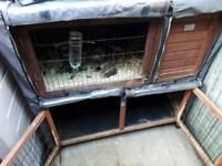 Guinea pigs & double hutch
