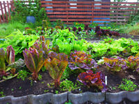 Grow-your-own in 2017! Experienced grower will help you create and maintain your veg plot.