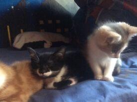 **kittens**