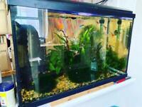 30 litre fish tank - full set up