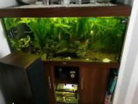 Selling my tank with everything including the filter, air pump, plants, fish.