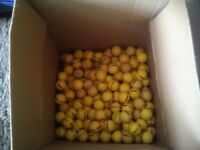 200 yellow range golf balls